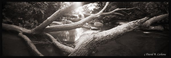 Fallen Trees -- Deckers Creek, ©David Cerbone 2015