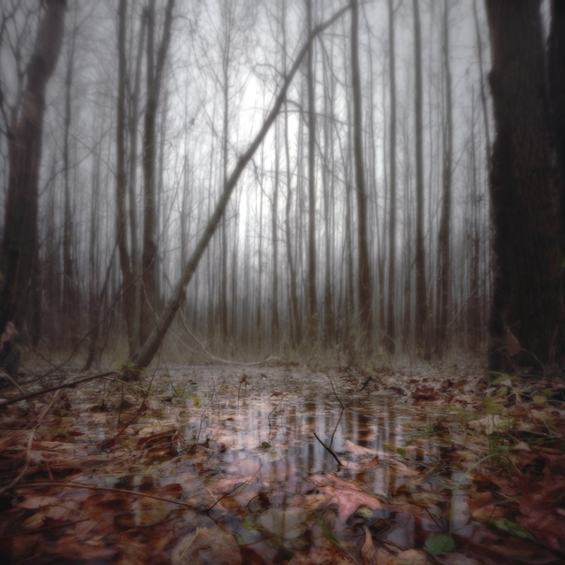 scott-speck-forest-on-a-rainy-day