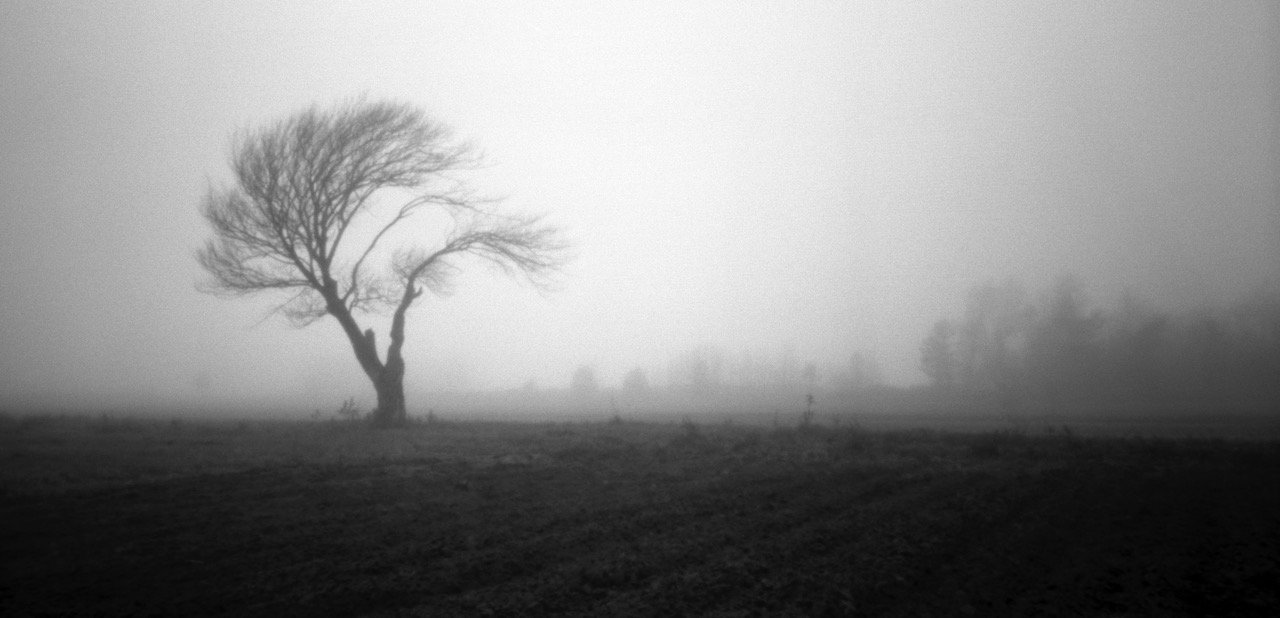 Old Tree No. 4 (In the Fog), Zero Image 6x7, Delta 100, ©Daniel Guy 2015