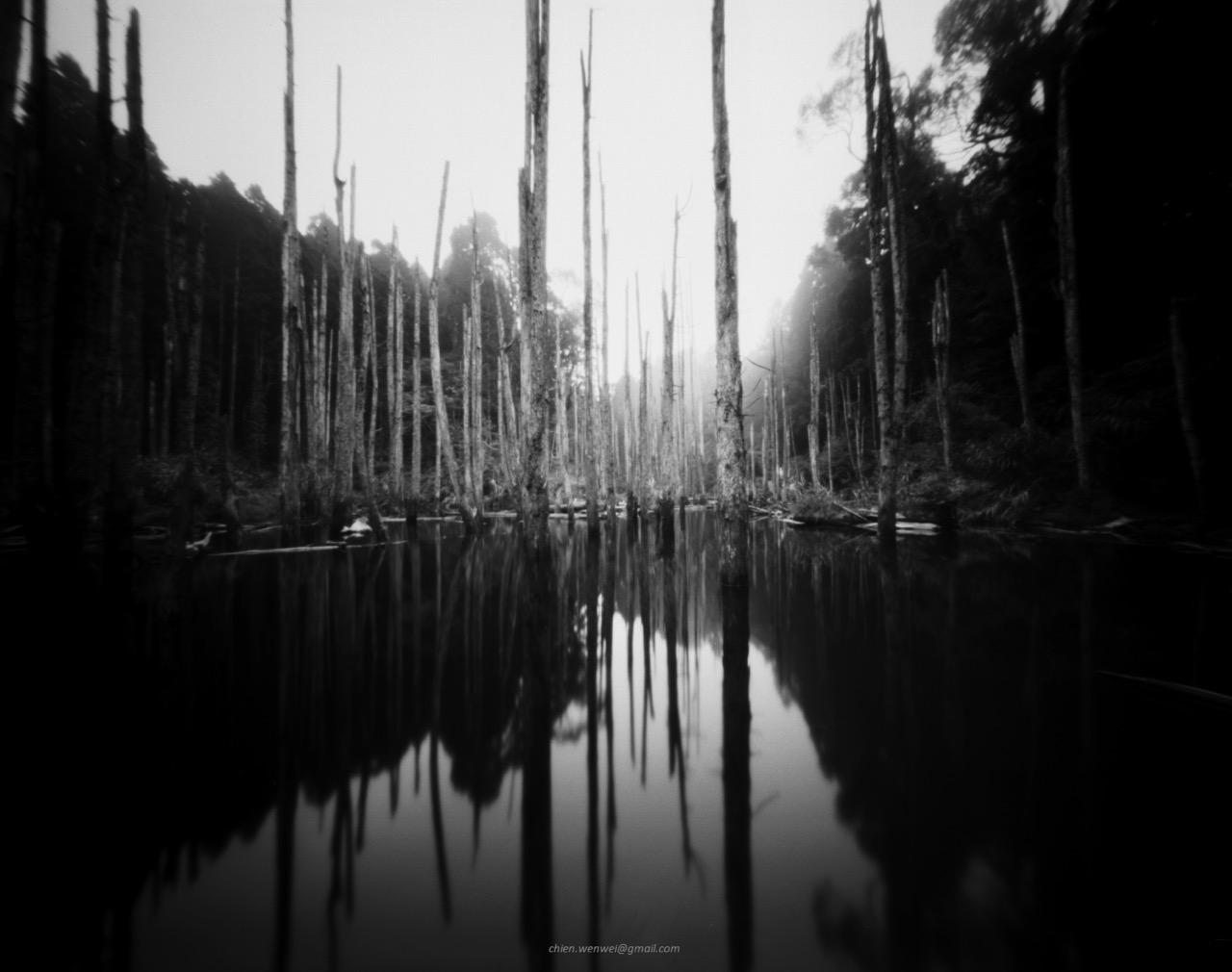 An Abandoned Forest, 4x5 pinhole camera, TMAX 100, ©Chien Wenwei 2015